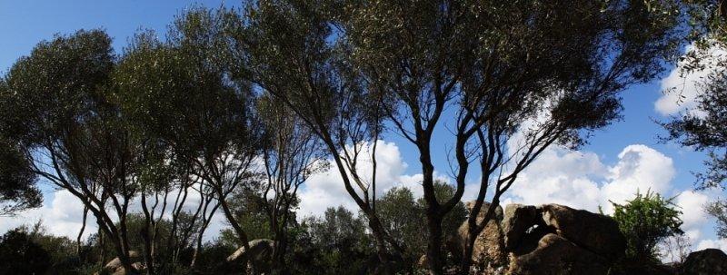 B&B Terra Smeralda bild9